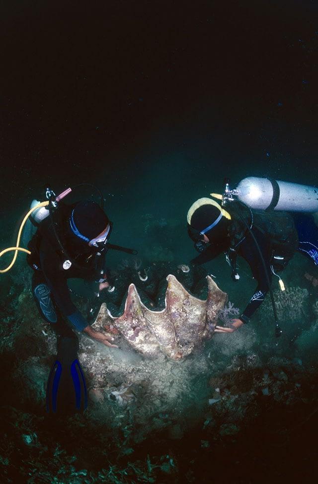 divers-raja-ampat
